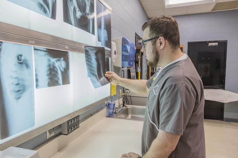 A student examines x-ray charts